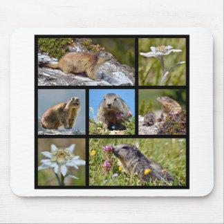 Marmotas y edelweiss alpinos del mosaico de las fo tapetes de ratón
