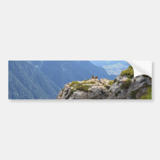 Marmots and Fassa Valley Bumper Sticker