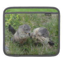 Marmots iPad sleeve