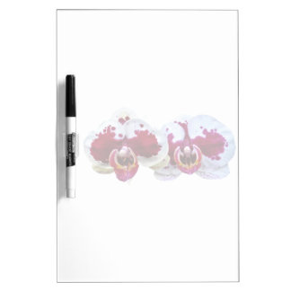 Maroon and White Phalaenopsis Orchids Side by Side Dry Erase Board