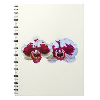 Maroon and White Phalaenopsis Orchids Side by Side Notebook