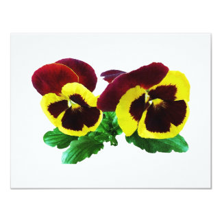 Maroon and Yellow Pansies Card
