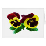 Maroon and Yellow Pansies Cards