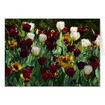 Maroon and Yellow Tulips Blank Card