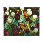 Maroon and Yellow Tulips Colorful Floral Canvas Print