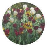 Maroon and Yellow Tulips Colorful Floral Eraser