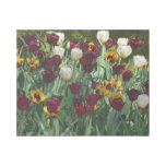 Maroon and Yellow Tulips Colorful Floral Gallery Wrap