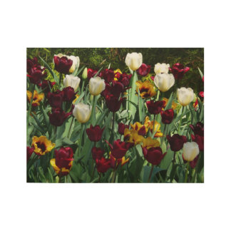 Maroon and Yellow Tulips Colorful Floral Wood Poster