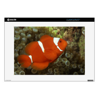 """Maroon clownfish with sea anemone 15"""" laptop decal"""