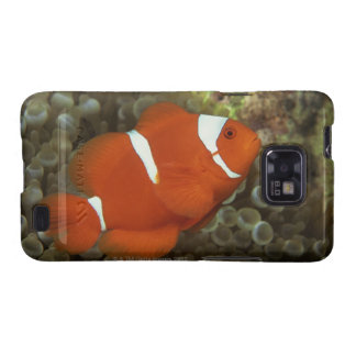 Maroon clownfish with sea anemone samsung galaxy SII cases