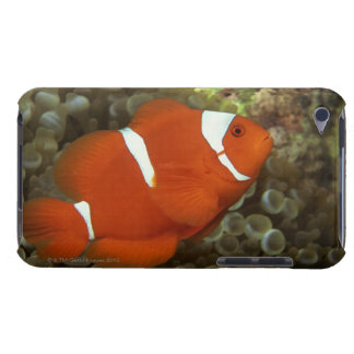 Maroon clownfish with sea anemone iPod touch case