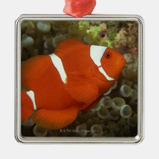 Maroon clownfish with sea anemone metal ornament