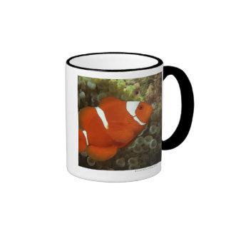 Maroon clownfish with sea anemone coffee mug
