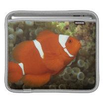 Maroon clownfish with sea anemone sleeve for iPads