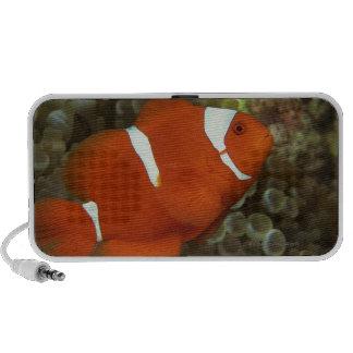 Maroon clownfish with sea anemone portable speaker