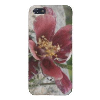 Maroon Columbine 4/4s iPhone SE/5/5s Case