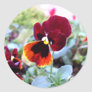 Maroon Orange And Yellow Pansy Stickers