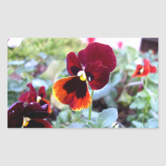 Maroon Orange And Yellow Pansy Rectangle Stickers