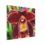 Maroon Orchids I Beautiful Red Floral Canvas Print