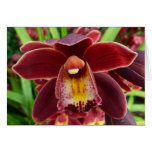 Maroon Orchids I Beautiful Red Floral Card