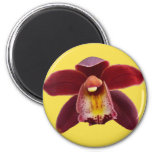 Maroon Orchids I Beautiful Red Floral Magnet