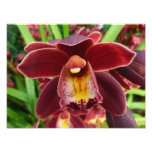 Maroon Orchids I Beautiful Red Floral Photo Print