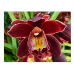 Maroon Orchids I Beautiful Red Floral Postcard