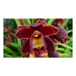 Maroon Orchids I Beautiful Red Floral Poster