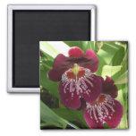 Maroon Orchids II Elegant Floral Magnet