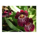 Maroon Orchids II Elegant Floral Postcard