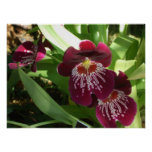 Maroon Orchids II Elegant Floral Poster