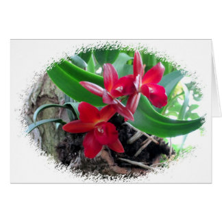 Maroon Orchids with Oval Framing Card