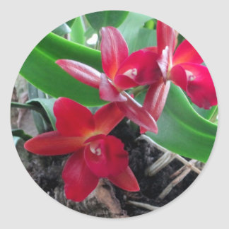 Maroon Orchids with Oval Framing Classic Round Sticker
