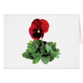 Maroon Pansy Greeting Card