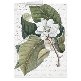 Marque el collage de la magnolia de Catesby con Tarjeta De Felicitación
