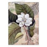 Marque la elegancia del vintage de la magnolia de  felicitaciones