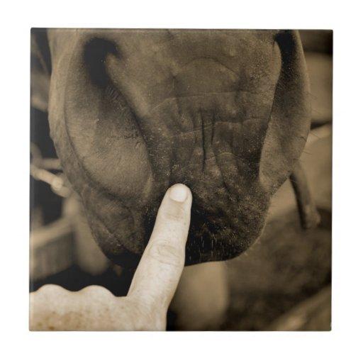 marqúelo su con etiqueta dedo en sepia del caballo tejas  cerámicas