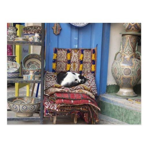 Marrakesh Cat Postcard