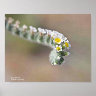 Marrón verde blanco del amarillo rizado de la flor póster