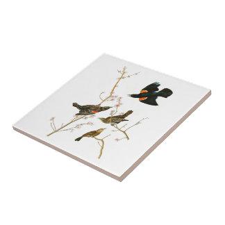 Marsh Blackbird John Audubon Birds of America Tile