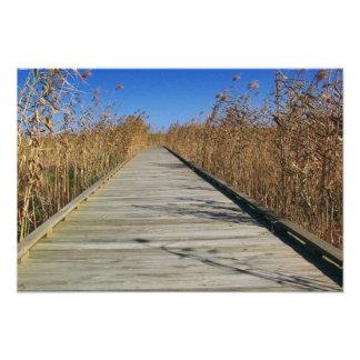 Marsh boardwalk Photo