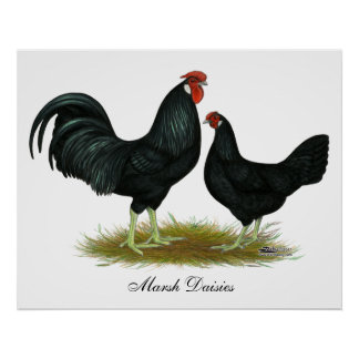 Marsh Daisy Chickens Poster