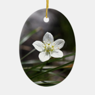 Marsh grass of Parnassus (Parnassia palustris) Ceramic Ornament