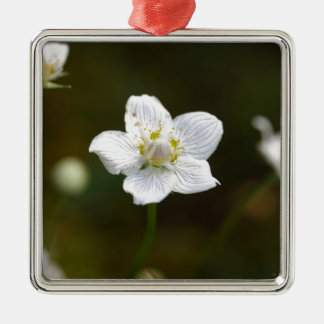 Marsh grass of Parnassus (Parnassia palustris) Metal Ornament