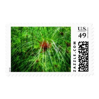 Marsh Grass Postage Stamps