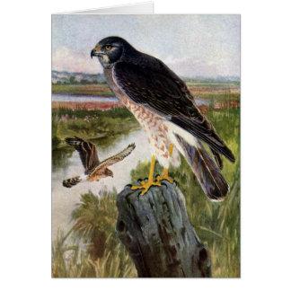Marsh Hawk Card