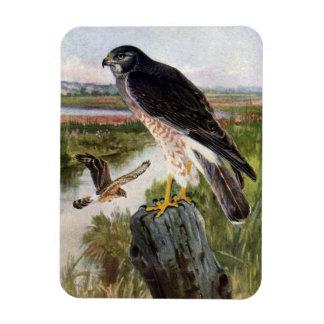 Marsh Hawk in Wetlands Rectangular Photo Magnet