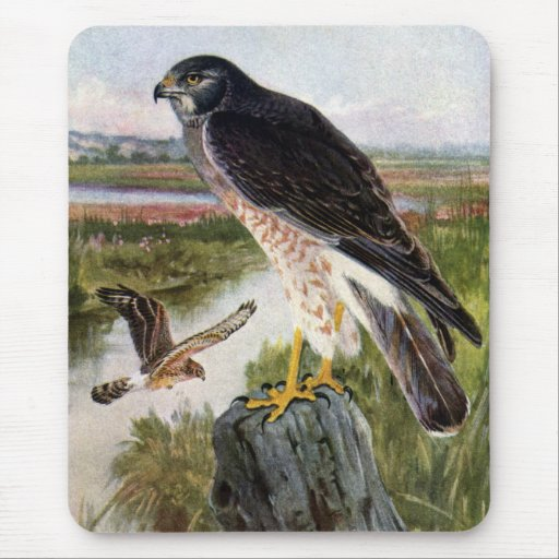 Marsh Hawk Mouse Pad