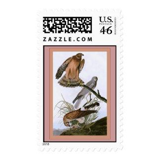 Marsh Hawk Postage