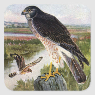 Marsh Hawk Square Sticker